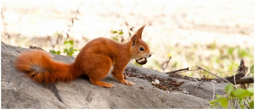 L'écureuil à la nOix - (c) 2011 OuiLeO.Com