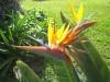 Madère - Oiseaux de Paradis - (c) 2008 OuiLeO.cOm